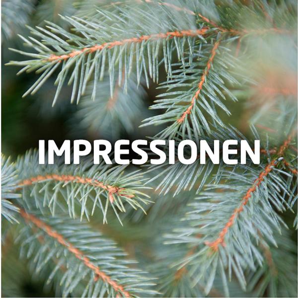Impressionen Tannenbaum.Christbäume Erne